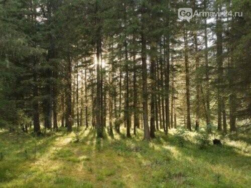 В крае восстановлено более 20 гектаров леса, фото-1