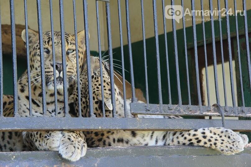 Армавирскому передвижному зоопарку помогли жители Курганинска, фото-1