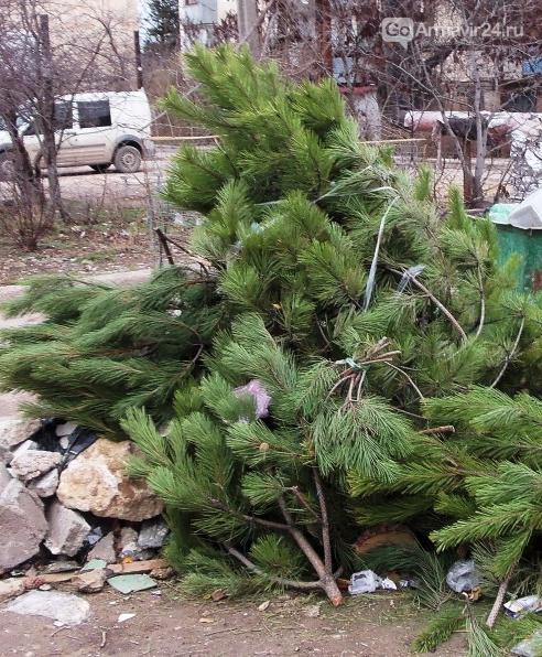 В Краснодаре продолжается утилизация новогодних красавиц, фото-1